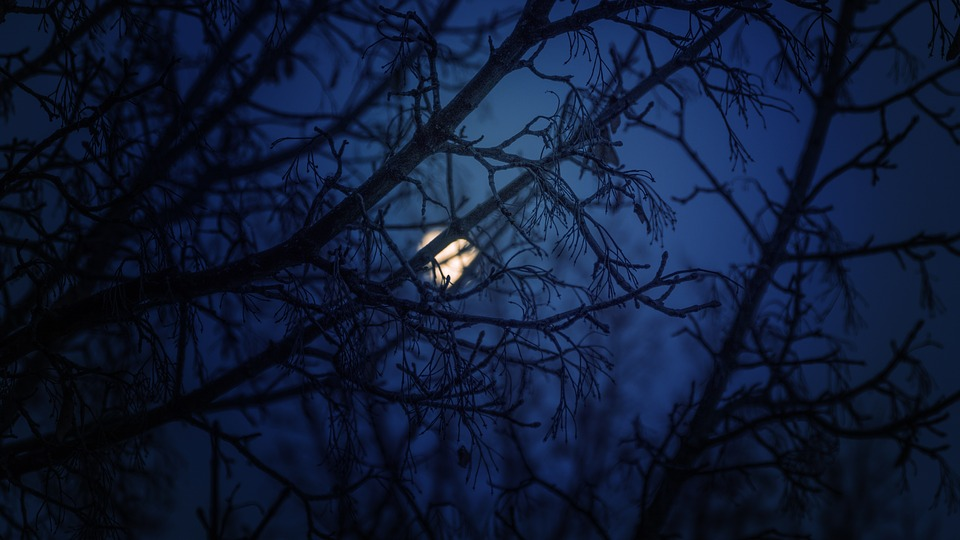 Moon Through Trees